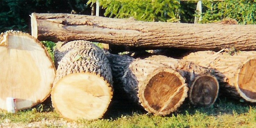 All of our logs are locally sourced in an environmentally sensitive manner.